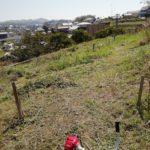 柿畑の草刈り