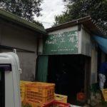 今年も柿渋工場稼働開始